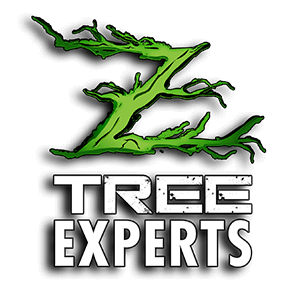 Ztree Experts Tree Service Montclair NJ