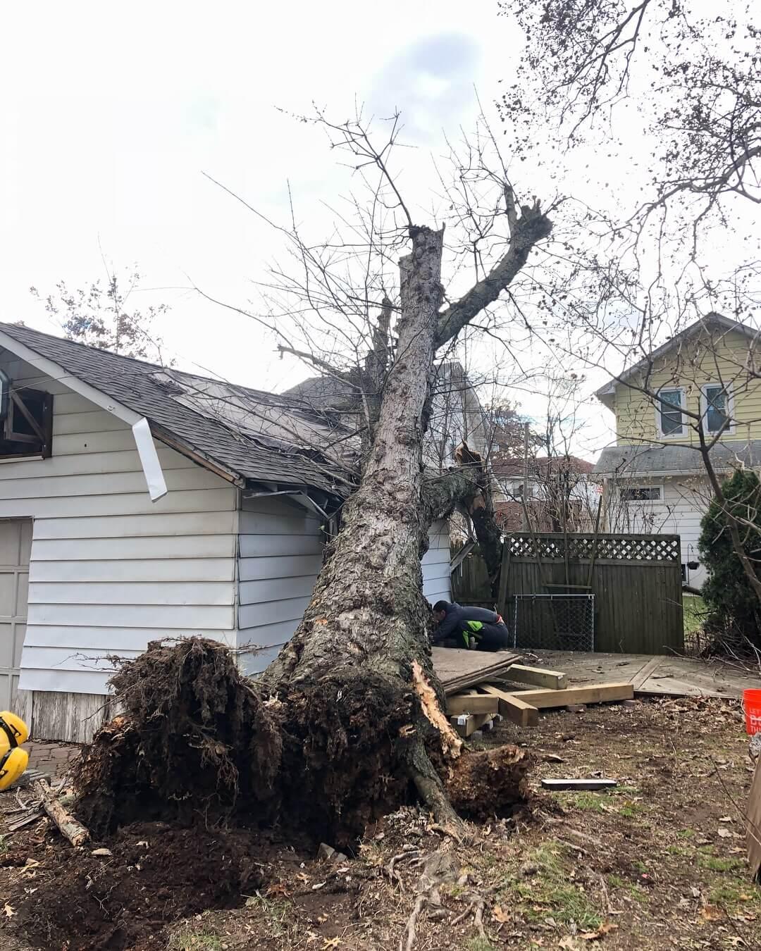 Emergency Tree Job Nutley Nj Z Tree Experts